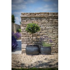 Shallow Round Vence Planters - Set of 2